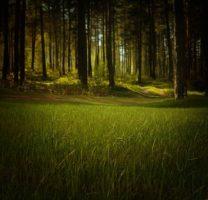 Im Wald daheim